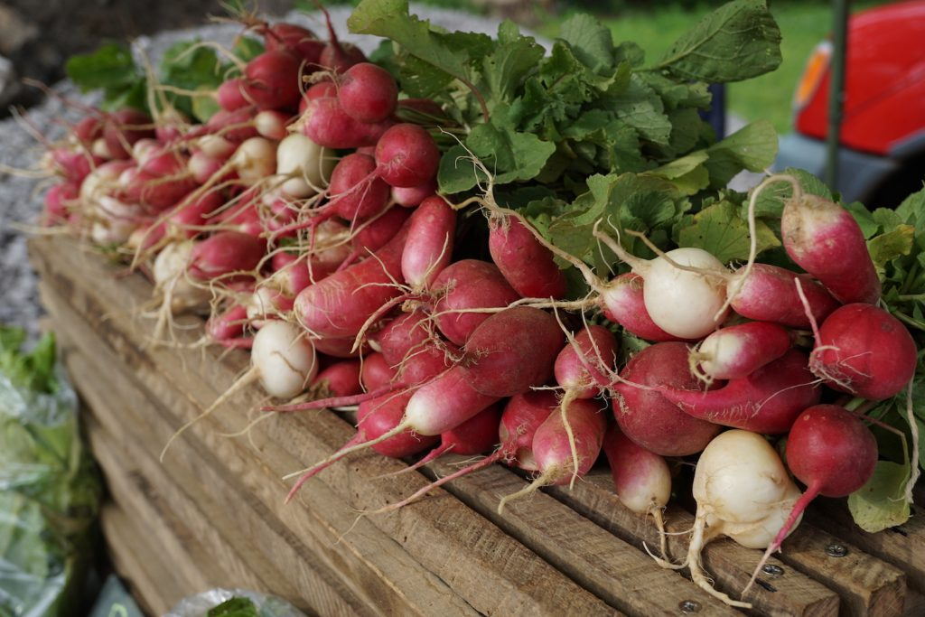Elmwood Stock Farm Organic Radishes
