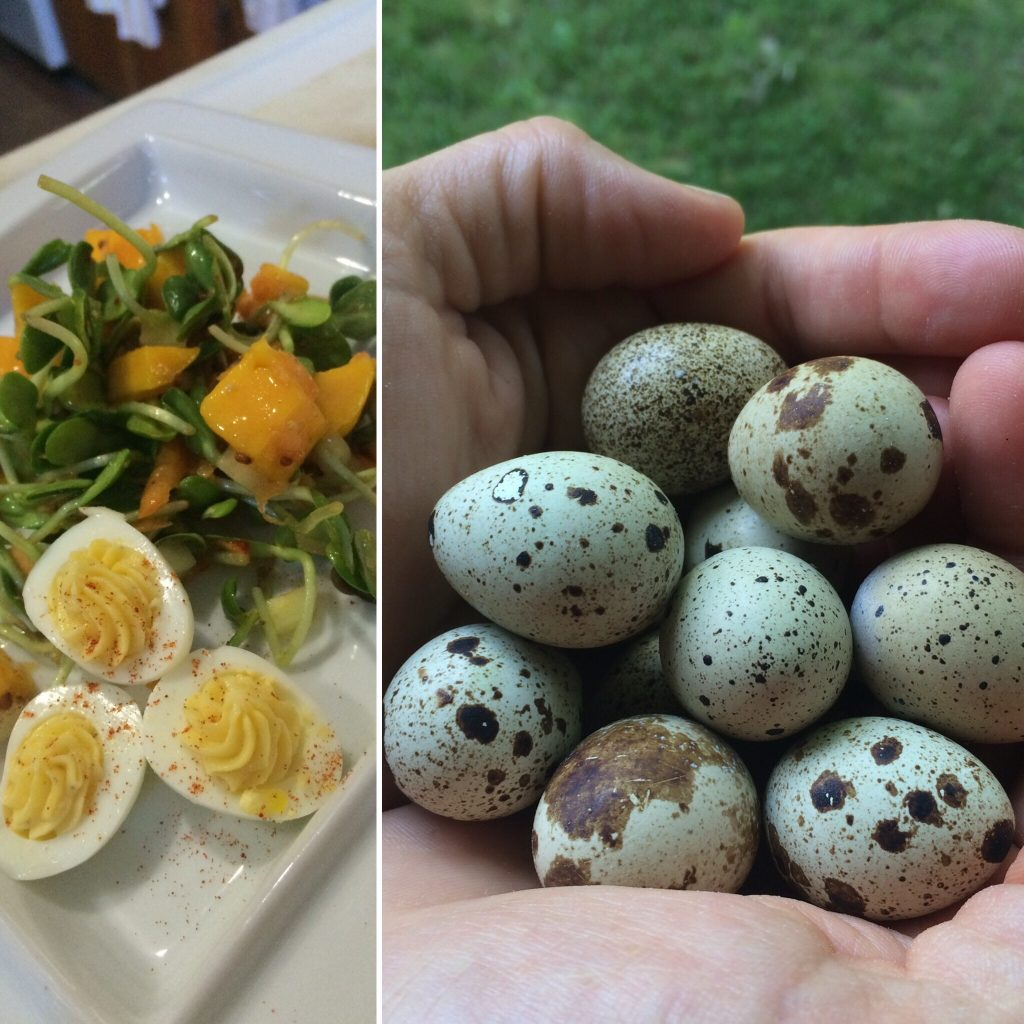Anchorage Farmers Market Quail Eggs from Swanberry Farm